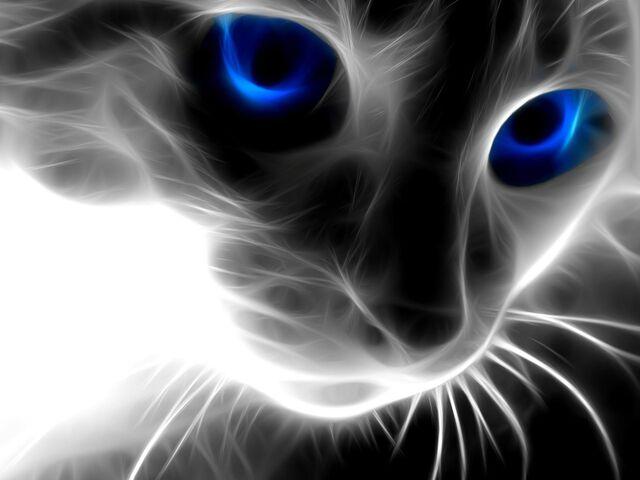 File:Black-cat-wallpaper-1-.jpg