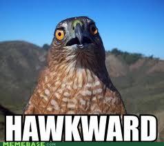 File:Hehehawk.jpg