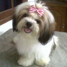 File:Snooki Puppy.jpg