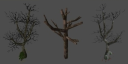 File:Object dead big tree.jpg