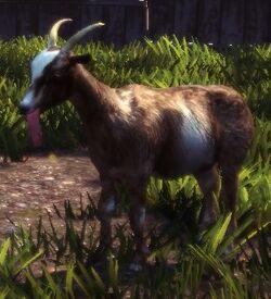 GoatNPC