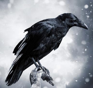 File:Raven Cait.PNG