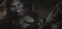 Lady Kong and Baby Kong