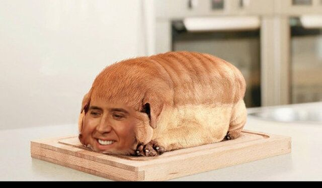 File:Nick-Cage-as-Everyone-11-Loaf-Dog-650x380.jpg