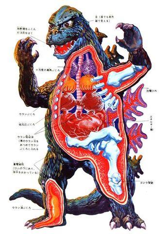 File:More Anatomy Of Godzilla.jpg