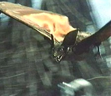 File:Last Days of Planet Earth - Monsters - Giant Bat Flying.jpg