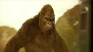 Kong 2017 5