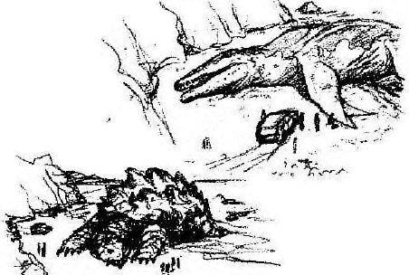 File:Giant Mosasaur.jpg
