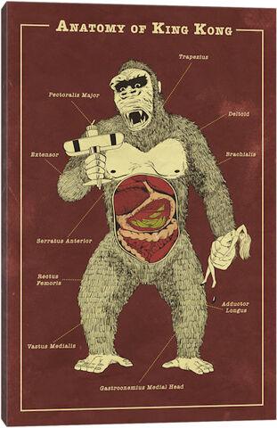 File:Kong antomyimage.jpeg