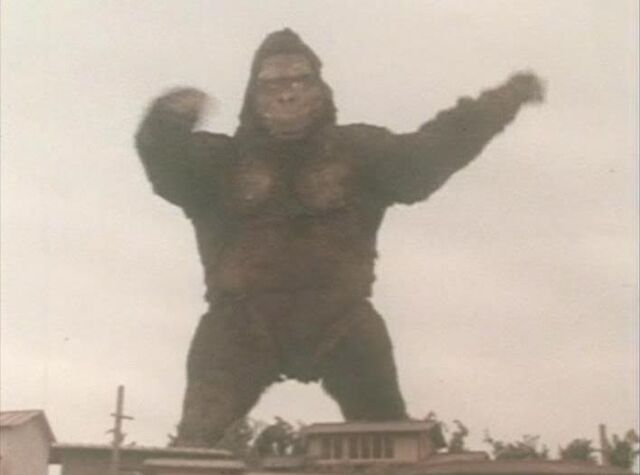 File:Gorilla ike.jpg