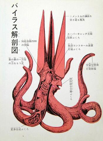 File:Viras Anatomy.jpg