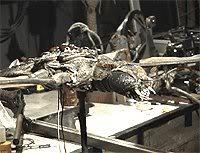 File:Behind Godzilla vs Megaguirus 3 Meganula prop.jpg