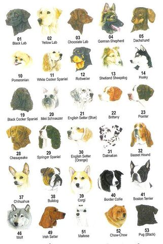 File:Dog breeds .jpg