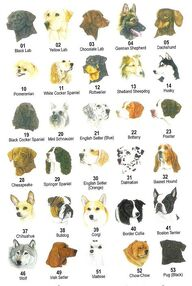 Dog breeds kims 5 accross 1