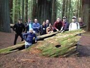 Mystery Tour 2013 Crew on Tree