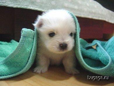 File:1154989168 cute animal baby 02.jpg
