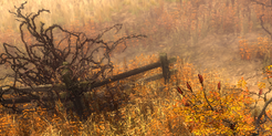 Withering Fields Icon