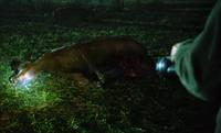 219-dead cow