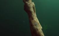304-Dan's leg grabbed