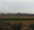 Argine destro del fiume Ombrone