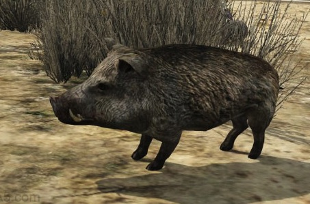 File:Gta5wildboar.jpg