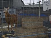 Director Mode Actors GTAVpc Animals Deer