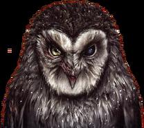 No beak