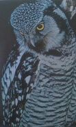 Hawkowl