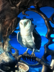 Shardbarnowl
