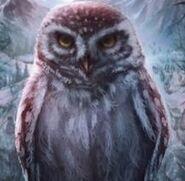 Owlethoole2