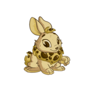 Cybunny biscuit
