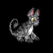 CheckeredBori
