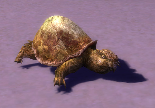 File:Young Turtle.jpg