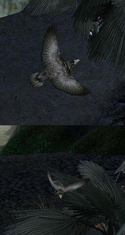 File:2 crows.JPG