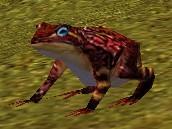 File:Redfrog.jpg