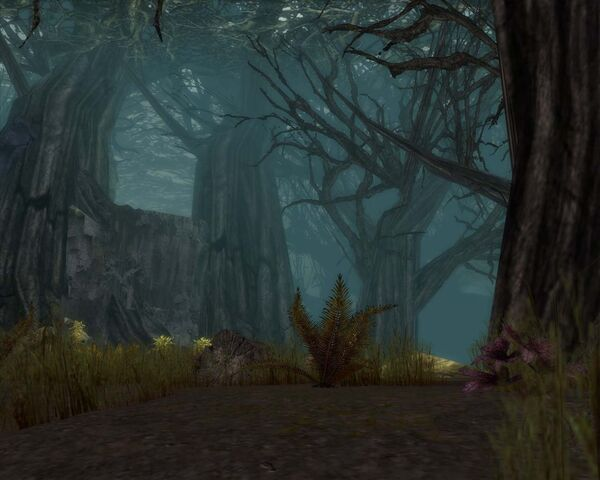 File:Echovald Forest.jpg