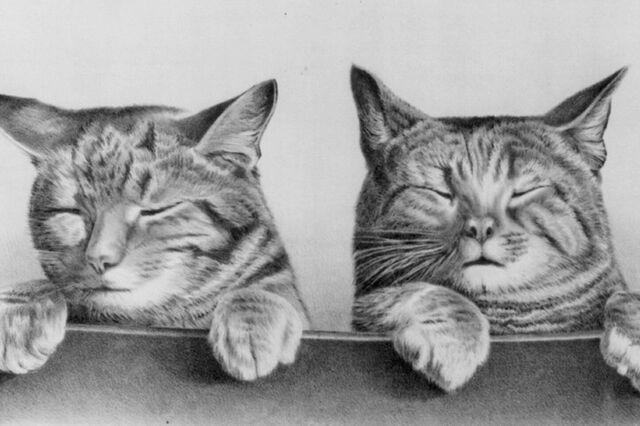 File:Two kittens-box.jpg