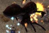 Dune Beetle Queen