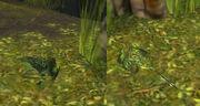 Ambient frog in LA