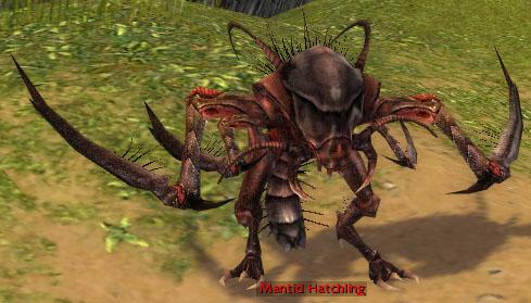File:Mantid Hatchling.jpg