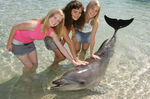 H2O Cast Petting Dolphin