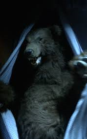 File:The bear.png