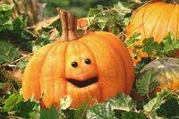 MuppetPumpkin