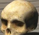Skull/Halo 3