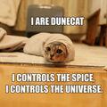 256px-1203835643 Dune Cat.jpg