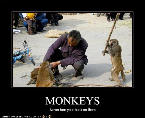 File:Monkeys.jpg