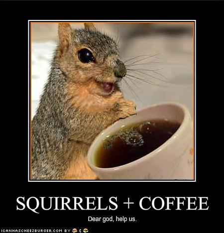File:Squirrels coffee.jpg