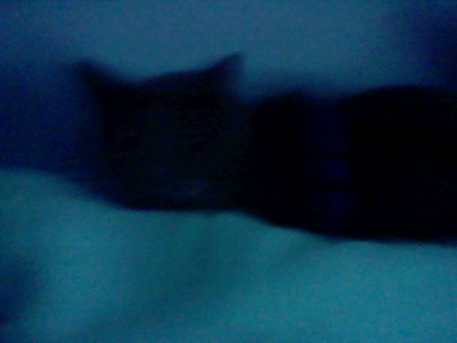 File:Cat 001.JPG