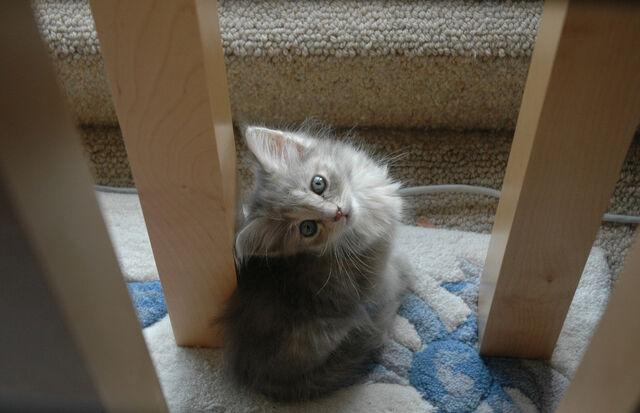 File:Kit-Kat !!!.jpg