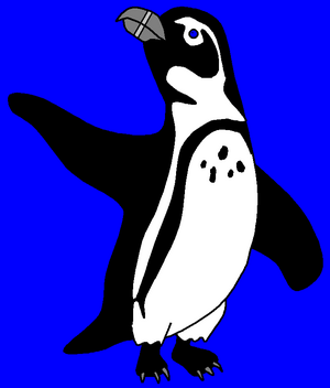 Eddie the African Penguin